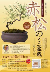 歌舞伎座10月29日(日)針金で枝の形を整える 赤松のミニ盆栽 苔仕立て